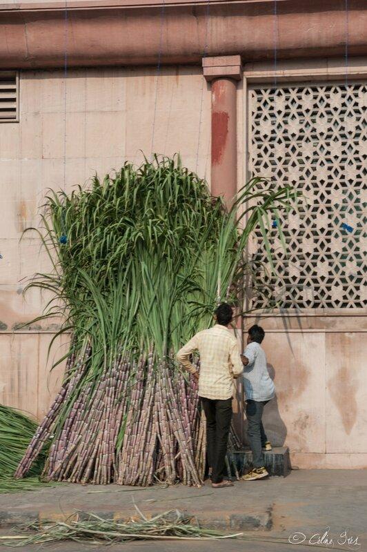 street life_Jaipur_10112015-002