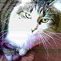 Mon chat m'a dit : les zumains de compagnie, c'est nul !!