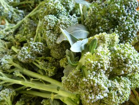 19-brocolis (1)