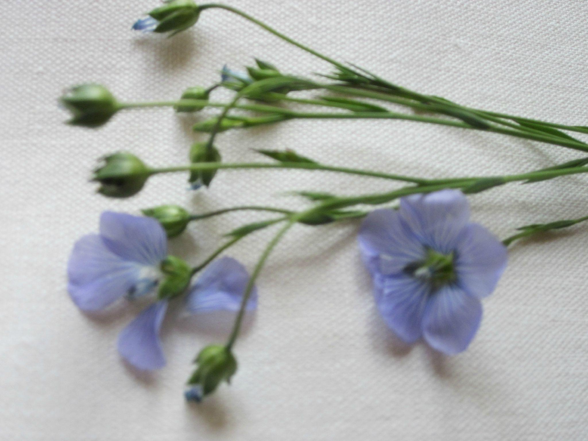 Couture, lin, petites fleurs, pour joli edredon