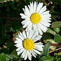 Des fleurs chez greenye # 6