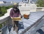 432px_674_vignette_Les_abeilles_6