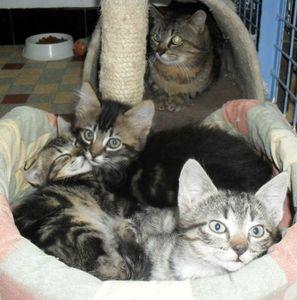 3 chatons Domi juin 2013