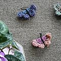 Papillons Anisbee-2