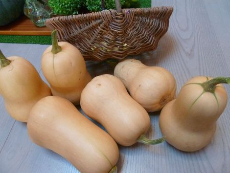 courges butternut (2)