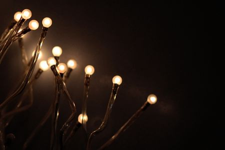Branches_lumineuses