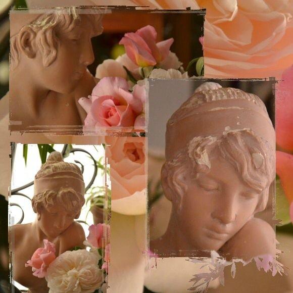 buste rose 2012