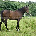 chevaux à Moréac 13