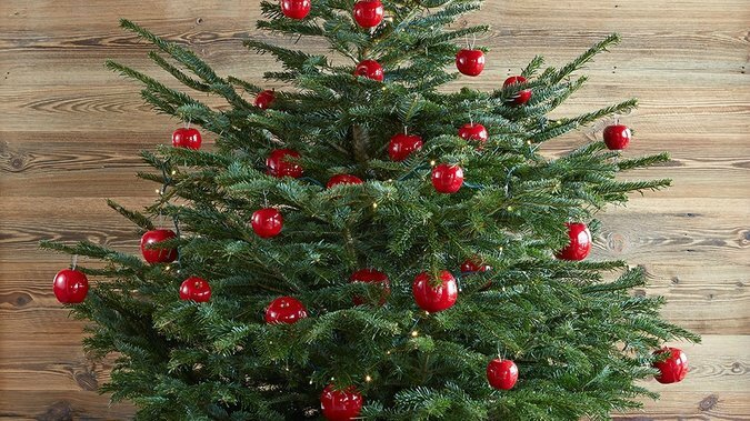 02A3017B07803975-c1-photo-sapin-en-pot-boules-rouges