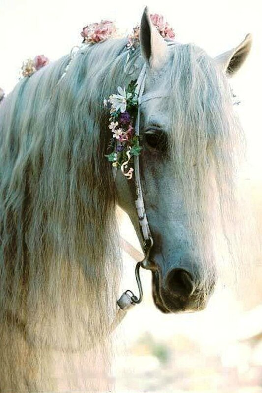 cheval-mariage