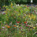 2009 09 01 Toutes les fleurs annuelles de mon jardin