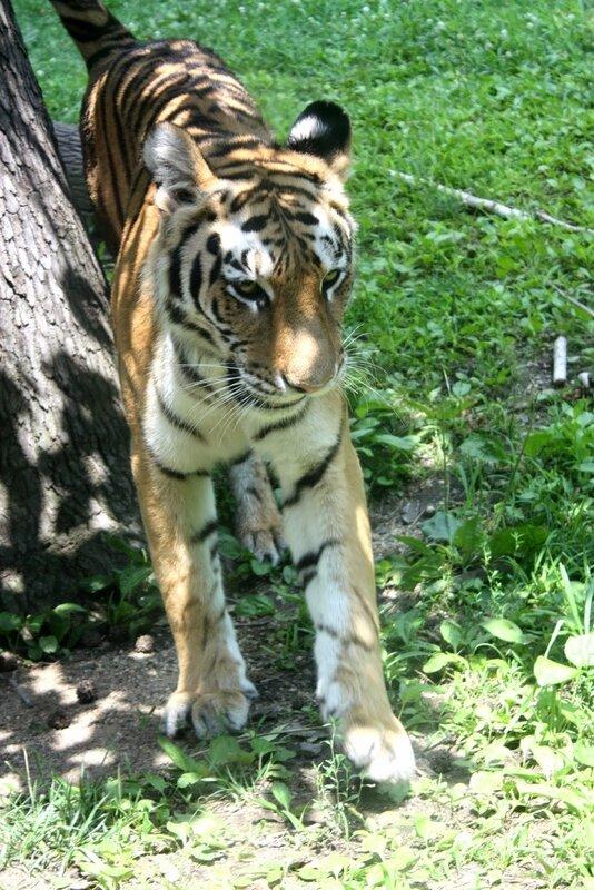 J11 - 08 juillet 2014 - zoo du Bronx (162).JPG