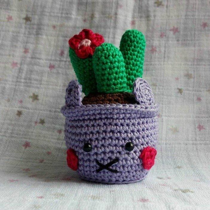 Cactus LAPINOU 6