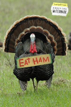 LO_thanksgiving_humor_eat_ham_turke