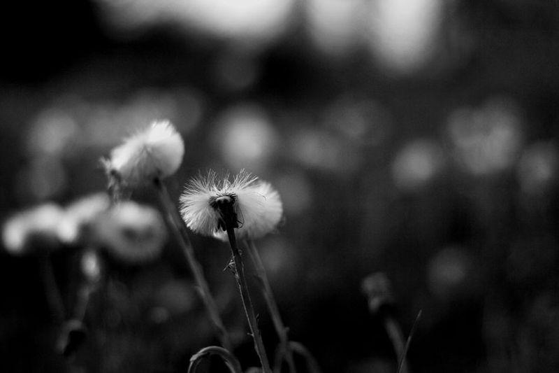 coton_small