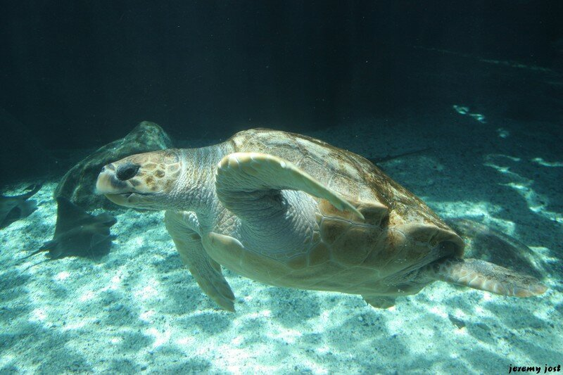 Tortue à l'aquarium de Cape town