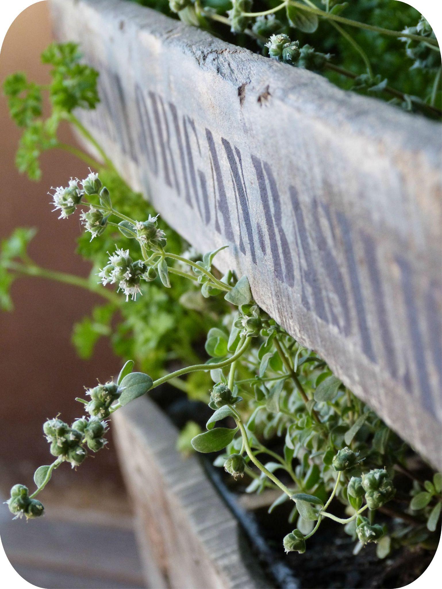 Avec Un Casier Un Mini Jardin Aromatique Madame Ki