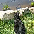 chat pêcheur (mauvais pêcheur !)
