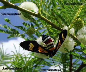 Papillons_21