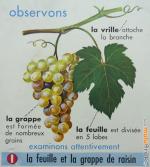 AFFICHE-Raisin-Chataigne-13-muluBrok