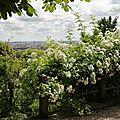 Roses entrée vue sur Lyon_13 22 06_5624