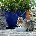 Pour isa-marie, l'histoire de thomie, petite chatte sauvage