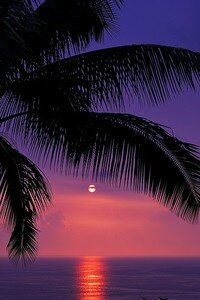 purple_sunset_2