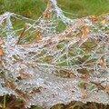 Toile d'araignée hivernal ....