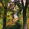 Linxe automne 2410152