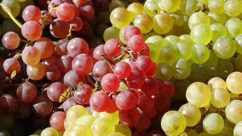 grapes-1147198_1920