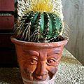 Quand et comment rempoter un cactus ?