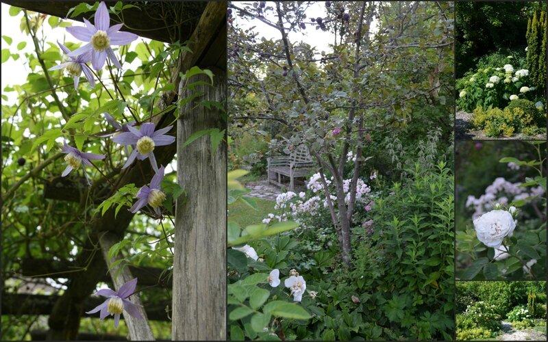 CLEMATITES Mon Jardin