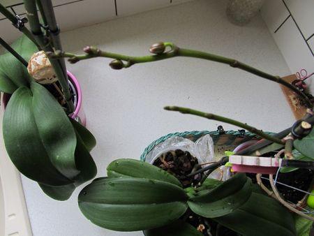 orchidéesetc 029
