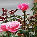 Feuilles, Passiflores, Arbouses, Roses 231016
