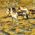 17-10-08 Sortie Montagne et rennes (119)