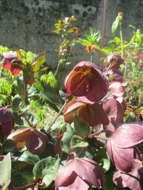 jardin 6 mai2016 065