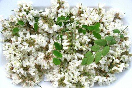 fleurs_d_acacia