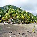 Huahine 2006 (49)cocotiers