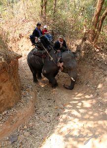 elephant_16
