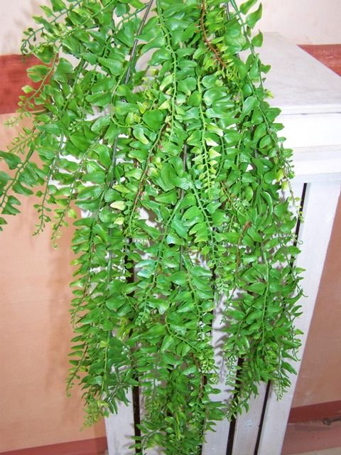 plantes retombantes awesome glycine chute cm with plantes retombantes tuteurer des plantes. Black Bedroom Furniture Sets. Home Design Ideas