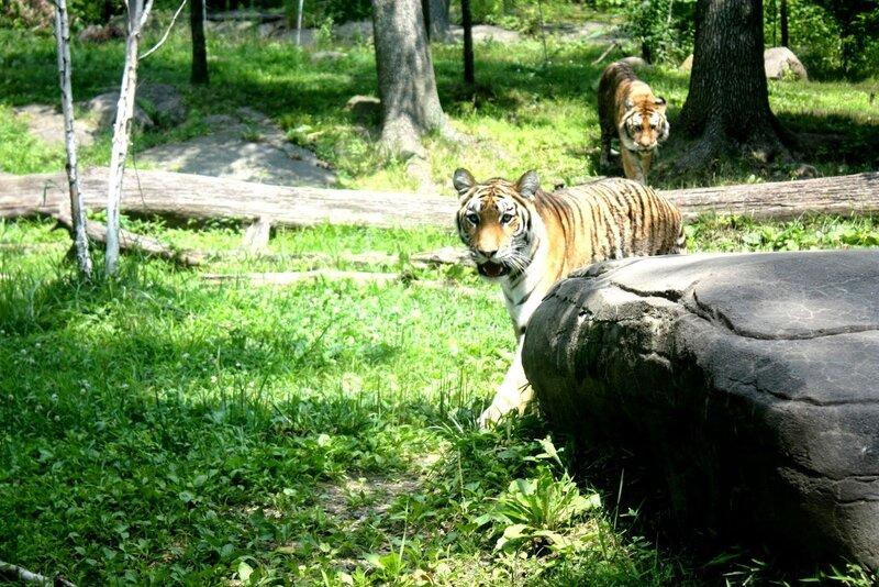 J11 - 08 juillet 2014 - zoo du Bronx (157).JPG