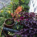 Jardinières de novembre
