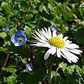 ♥ le printemps arrive au jardin... ♥