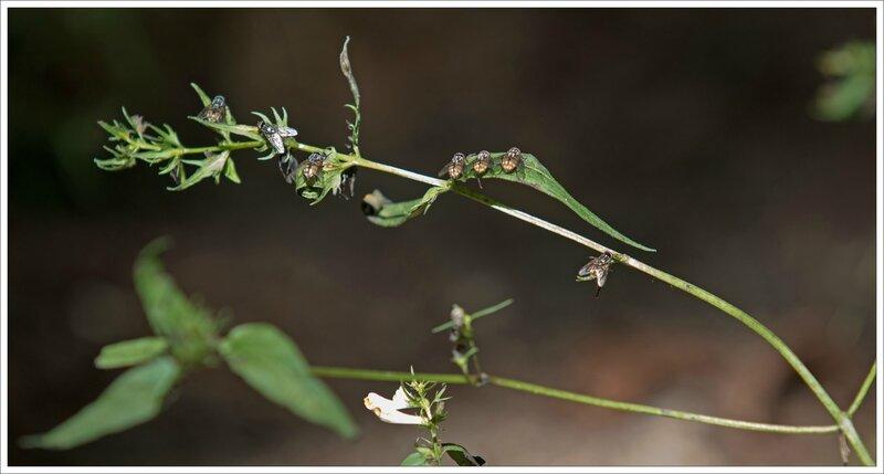 Gatine mouches plante chaleur 040715