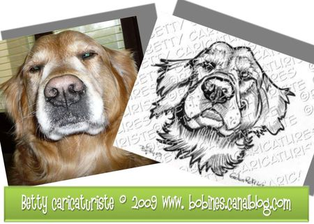 caricature_chien_gloden_retriever