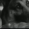 Mon chien (1955) de georges franju