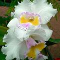 Exposition d'Orchidées 2009