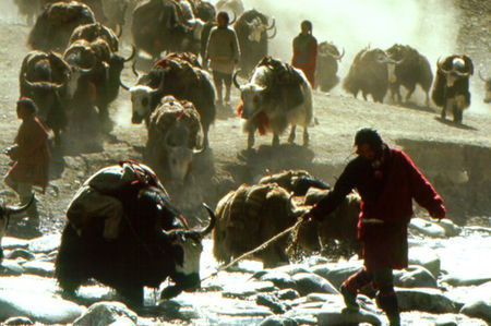 photo_Himalaya_L_Enfance_d_un_chef_1999_4