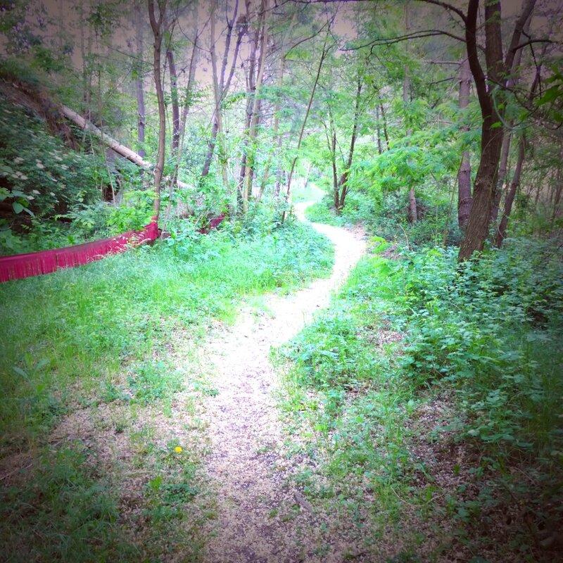chemin de fleurs d'acacia yurtao