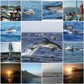 Sortie en mer et rencontre avec les dauphins